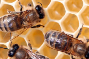 miedo a las abejas