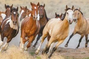 miedo a los caballos